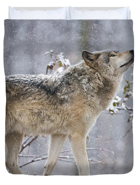 Timber Wolf Pictures 188 Duvet Cover by Wolves Only