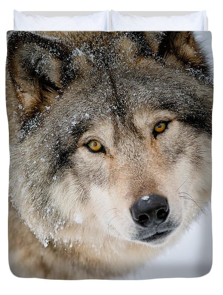 Timber Wolf Pictures 255 Duvet Cover by Wolves Only