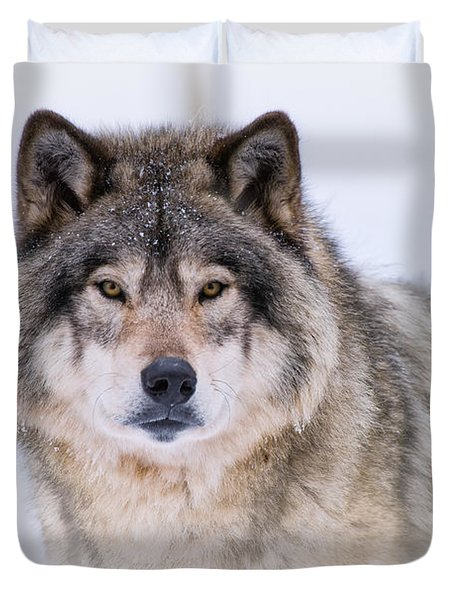 Timber Wolf Pictures 256 Duvet Cover by Wolves Only