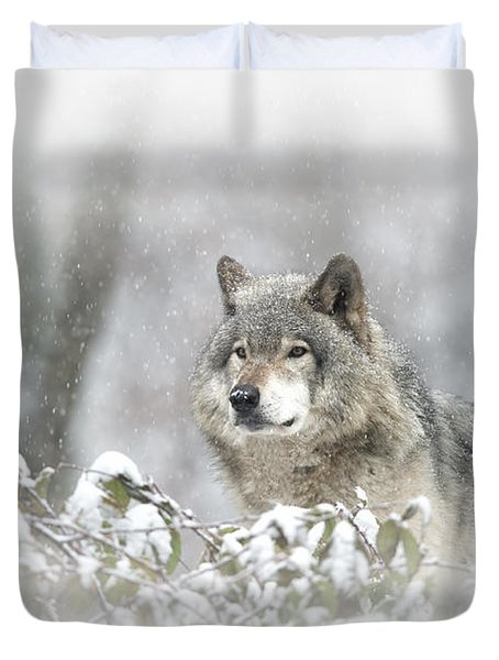 Timber Wolf Pictures 279 Duvet Cover by Wolves Only