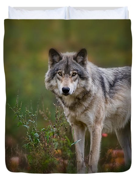 Timber Wolf Pictures 401 Duvet Cover
