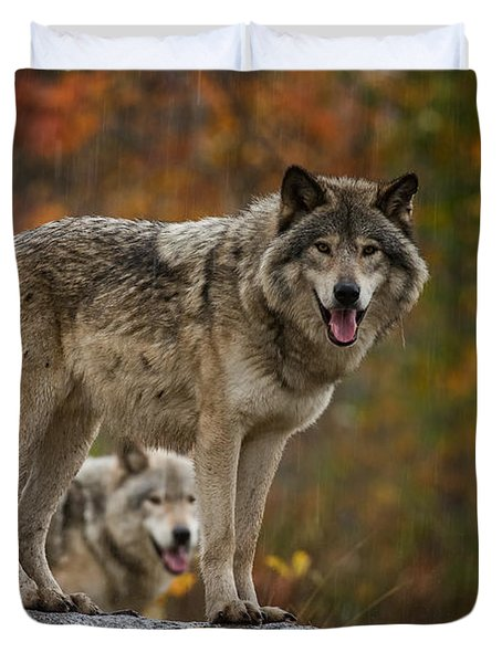 Timber Wolf Pictures 410 Duvet Cover