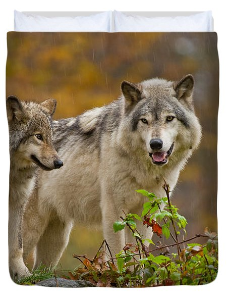 Timber Wolf Pictures 411 Duvet Cover