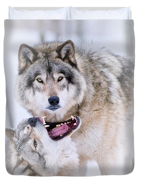 Timber Wolf Pictures 56 Duvet Cover by Wolves Only