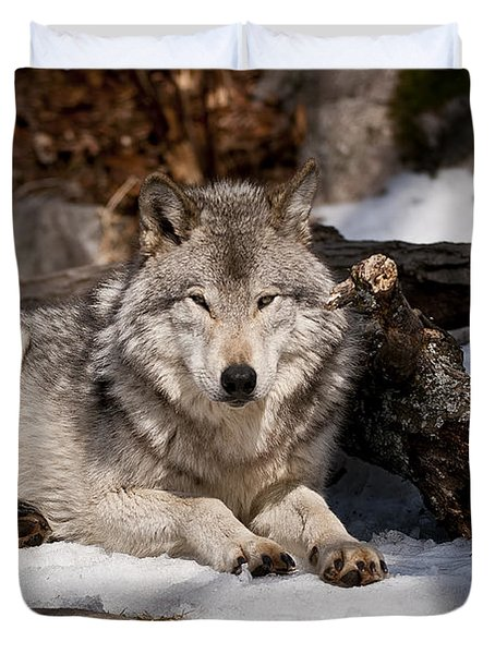 Timber Wolf Pictures 776 Duvet Cover by World Wildlife Photography