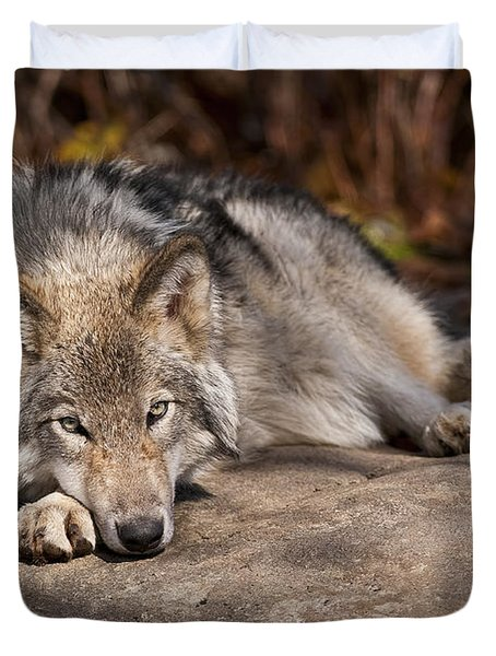 Timber Wolf Pictures 945 Duvet Cover by World Wildlife Photography