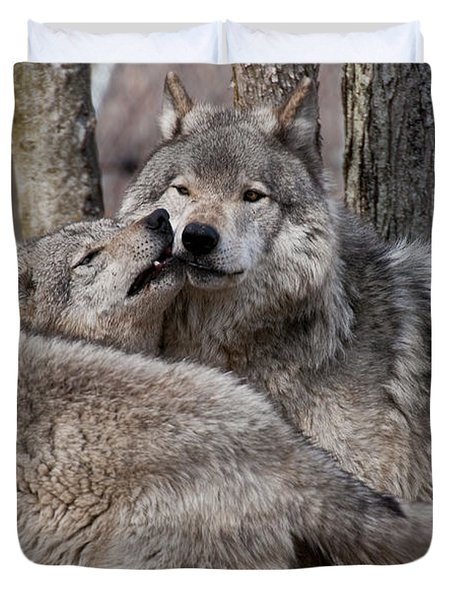 Duvet Cover featuring the photograph Timber Wolves Playing by Wolves Only
