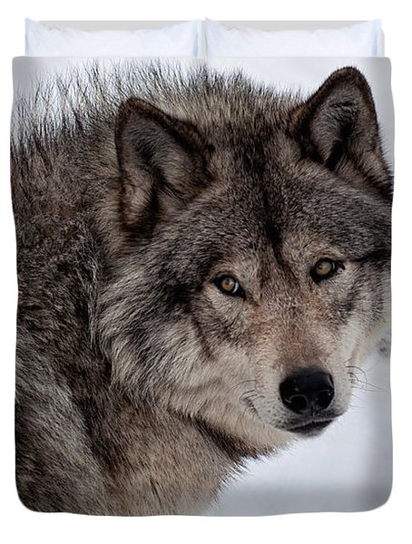 Duvet Cover featuring the photograph Timberwolf At Rest by Bianca Nadeau