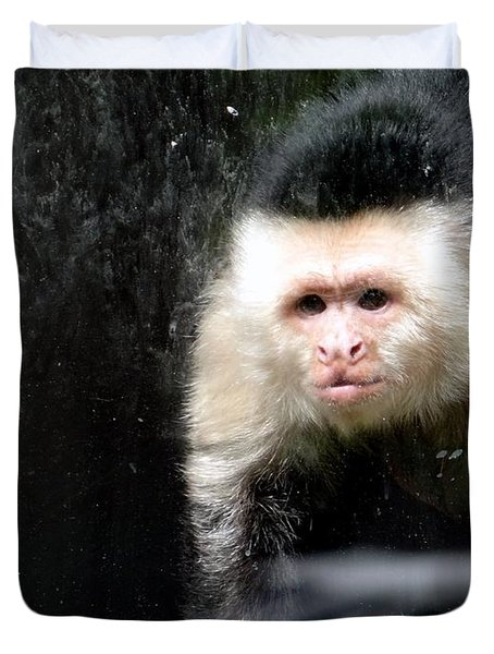 Tito In Window Duvet Cover by Ed Weidman