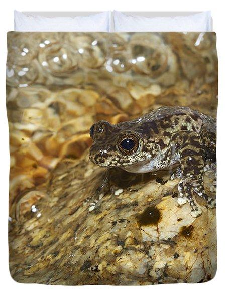 Torrent Treefrog Aka Waterfall Frog Duvet Cover