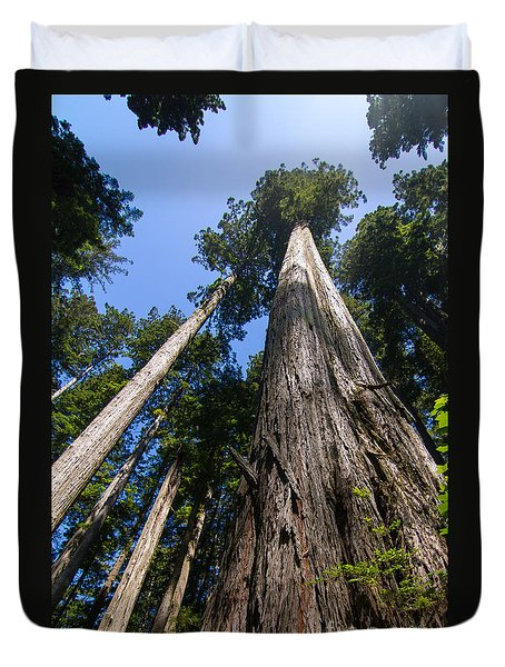 Towering Redwoods Duvet Cover by Paul Rebmann