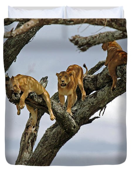 Tree Lions Duvet Cover by Tony Murtagh