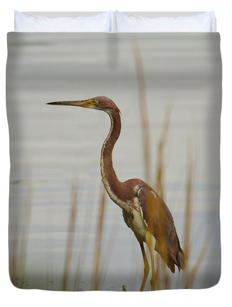 Tri-colored Heron  Duvet Cover by Bob Sample