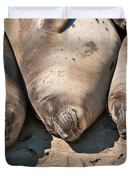 Trio Of Sleeping Northern Elephant Seals Mirounga Angustirostris At The Piedras Blancas Beach Duvet Cover by Jamie Pham