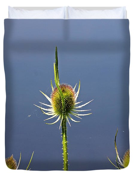 Trio Of Teasels Duvet Cover