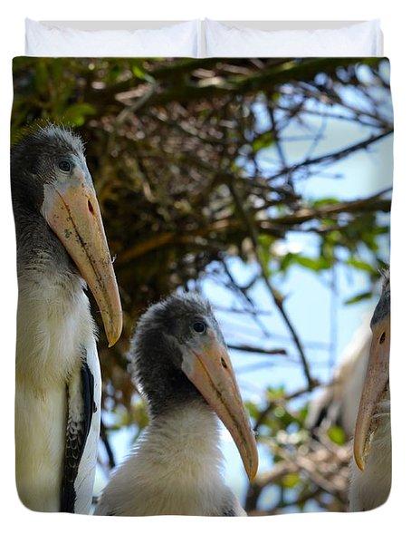 Triplet Wood Stork Nestlings Duvet Cover by Richard Bryce and Family