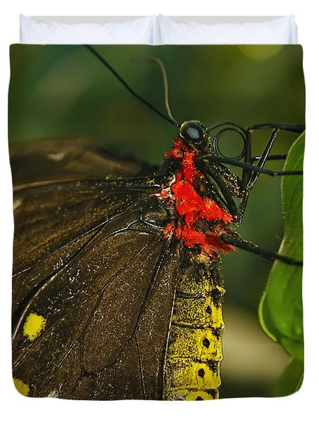 Duvet Cover featuring the photograph Troides Helena Butterfly  by Olga Hamilton