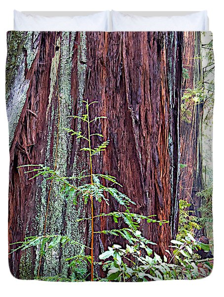 Trunk Of Coastal Redwood In Armstrong Redwoods State Preserve Near Guerneville-ca Duvet Cover