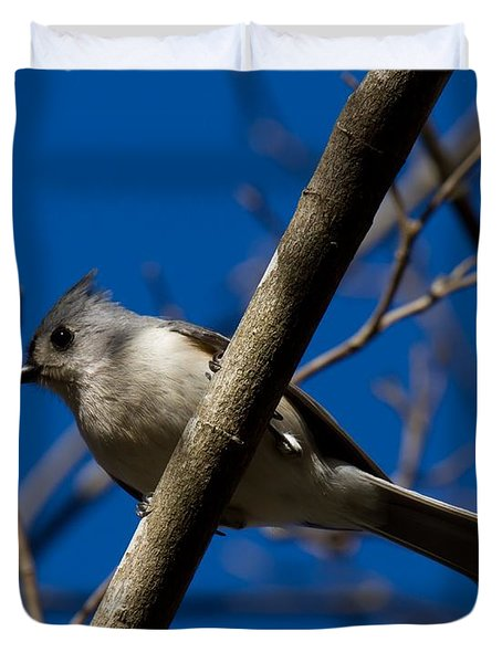 Tufted Titmouse Duvet Cover by Robert L Jackson