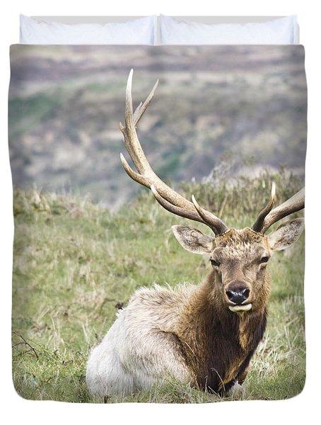 Tule Elk Bull Duvet Cover by Priya Ghose