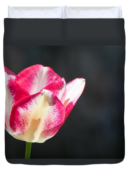Tulip On Black Duvet Cover by Photographic Arts And Design Studio