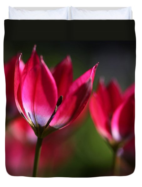 Tulips Duvet Cover by Annie Snel