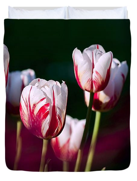 Duvet Cover featuring the photograph Tulips Garden Flowers Color Spring Nature by Paul Fearn