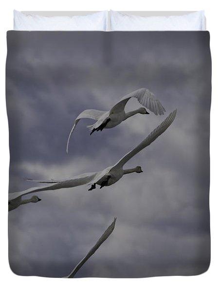 Tundra Swans Taking Flight 1 Duvet Cover