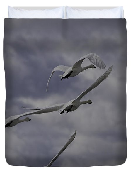 Tundra Swans Taking Flight 1 Duvet Cover