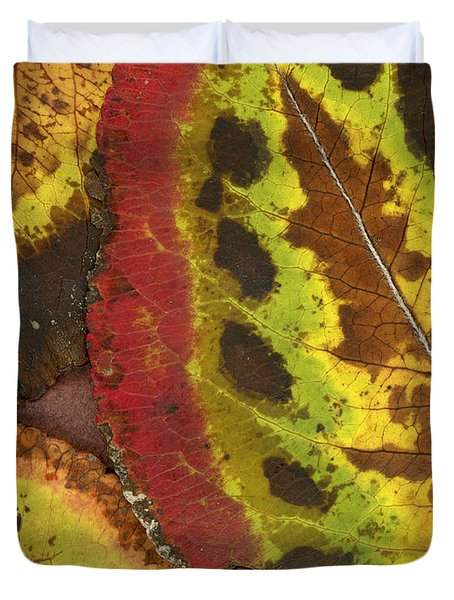 Turning Leaves 3 Duvet Cover by Stephen Anderson