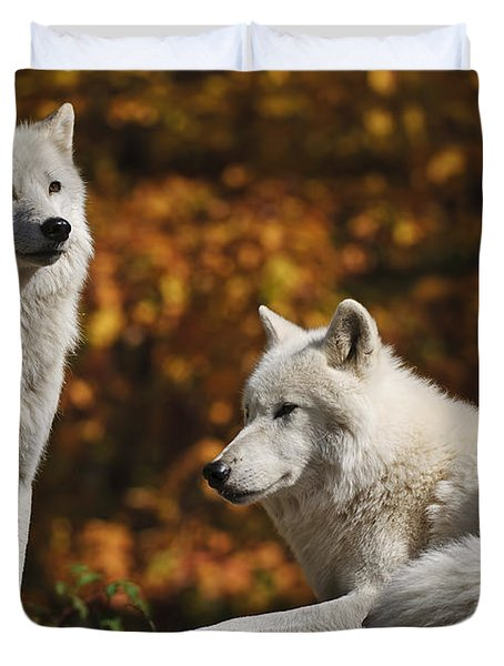 Duvet Cover featuring the photograph Two Arctic Wolves On Rock Hill by Wolves Only