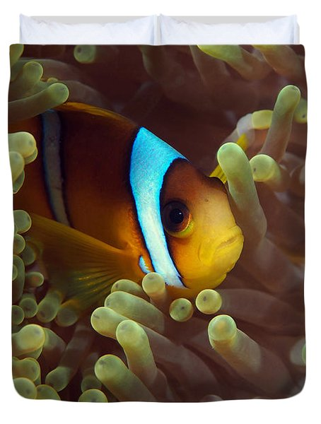 Two-banded Anemonefish Red Sea Egypt Duvet Cover