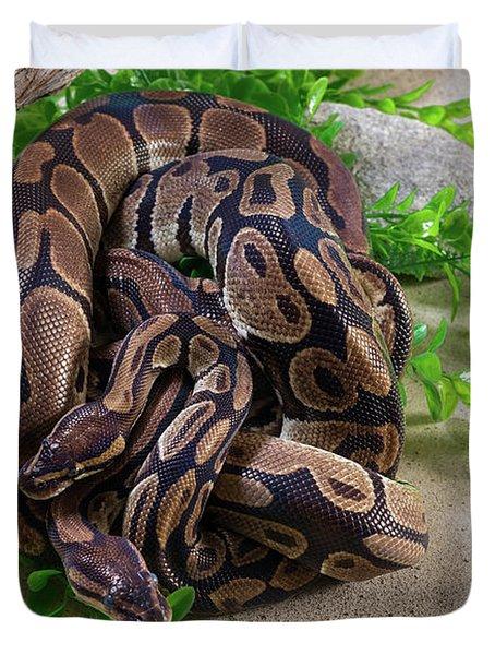 Two Burmese Pythons Python Bivittatus Duvet Cover