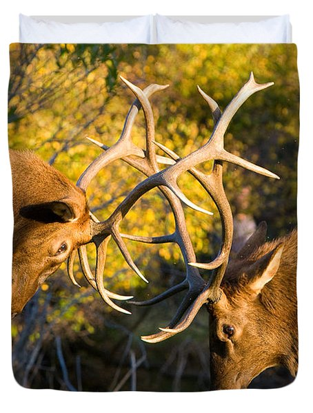 Two Elk Bulls Sparring Duvet Cover