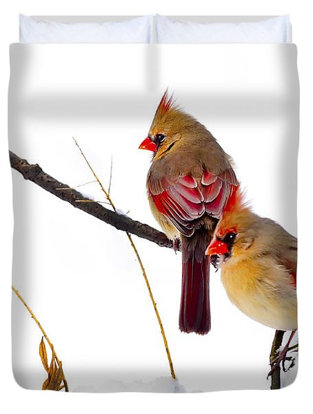 Two Females Posing As Cardinals Duvet Cover by Randall Branham