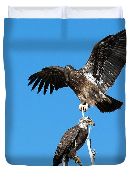 Two Immature Bald Eagles Duvet Cover