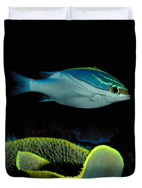Two-lined Monocle Bream Scolopsis Duvet Cover