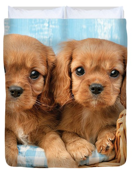 Two Puppies In Woven Basket Dp709 Duvet Cover by Greg Cuddiford