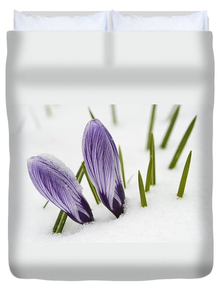 Two Purple Crocuses In Spring With Snow Duvet Cover