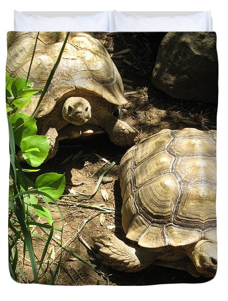 Two Tortoises Duvet Cover by CML Brown