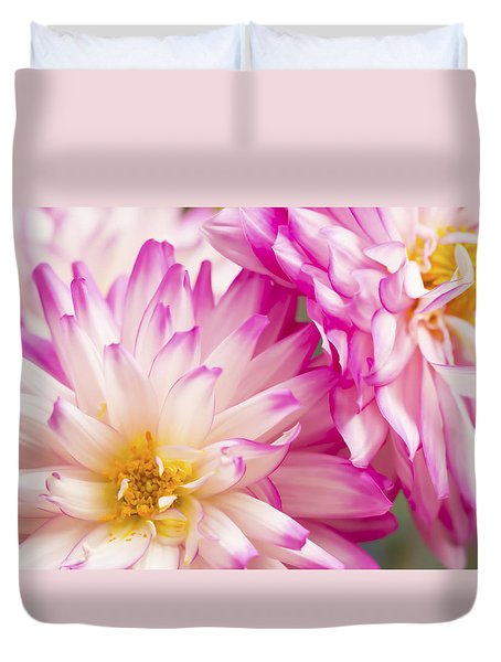 Two White And Pink Decorative Dahlias Duvet Cover by Daphne Sampson