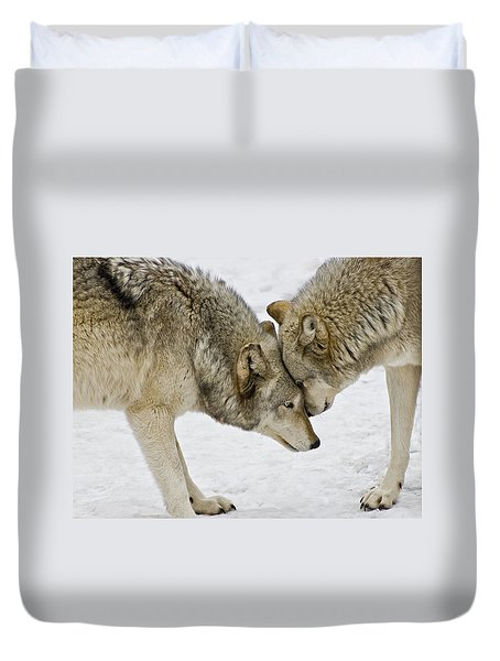 Two Wolves In  A Staredown Duvet Cover