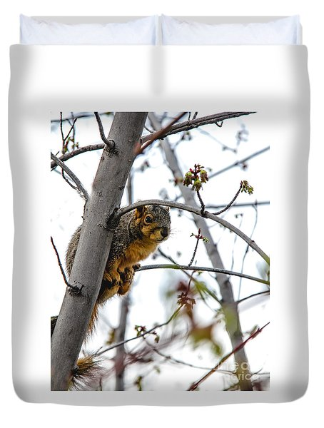 Up The Tree Duvet Cover by Robert Bales