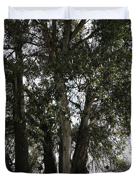 Up-view Of Oak Tree Duvet Cover