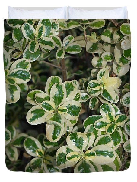 Variegated Coprosma Replens Duvet Cover