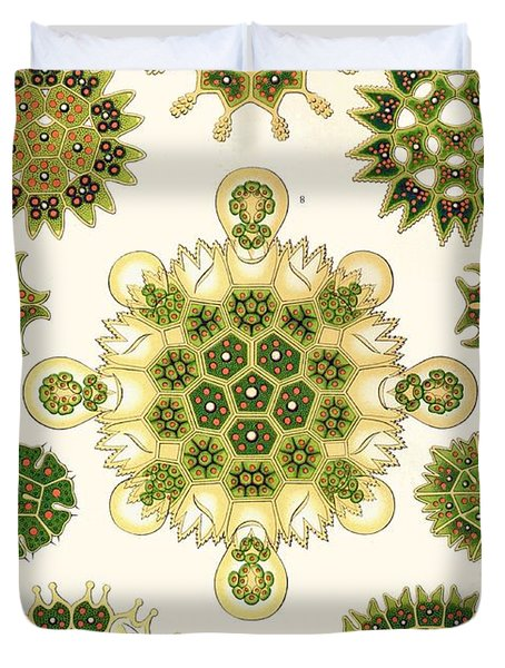 Varities Of Pediastrum From Kunstformen Der Natur Duvet Cover