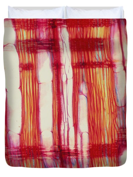 Vascular Rays And Vessel Elements Duvet Cover