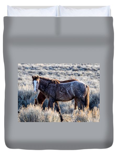 Velvet - Young Colt In Sand Wash Basin Duvet Cover