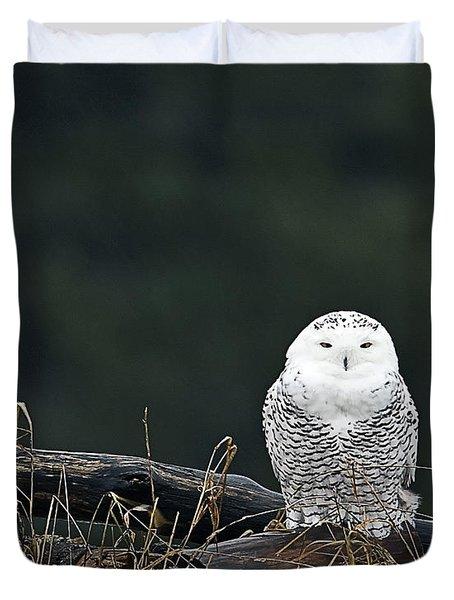 Vermont Snowy Owl Duvet Cover