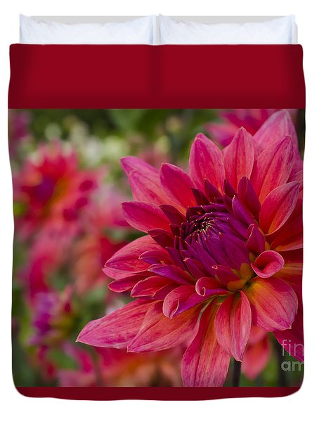 Vibrant Dahlias At Ferncliff Duvet Cover